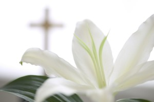 White Lily and Cross