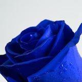 Georgia Rose